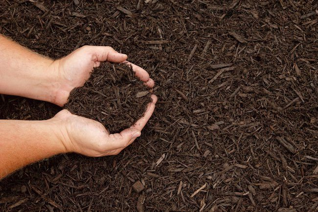 Picture of bark mulch for flower beds