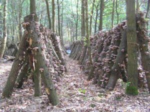 place logs to maximise mushroom production (how to grow mushrooms)