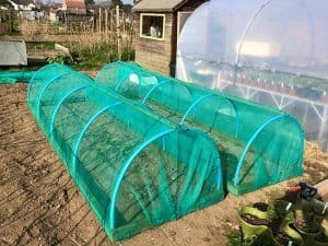 Picture of netted growing bed
