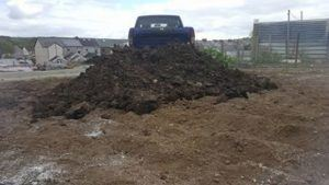 Well rotted horse manure for giant marrows