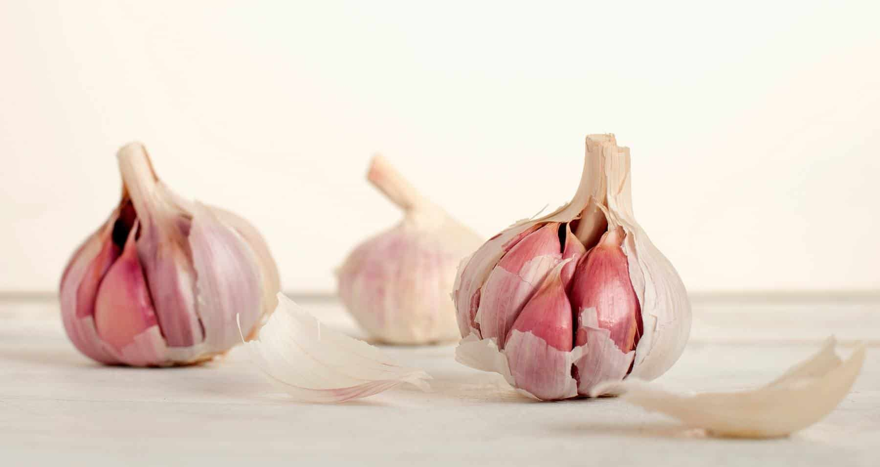 Picture of garlic bulbs