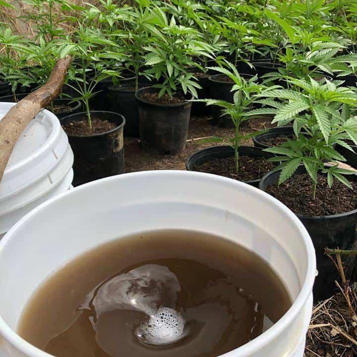 Brewing compost tea in a 5 gallon bucket