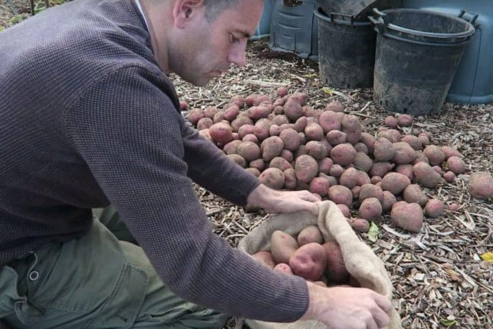 How To Store Potatoes And Seed Potatoes Long Term,