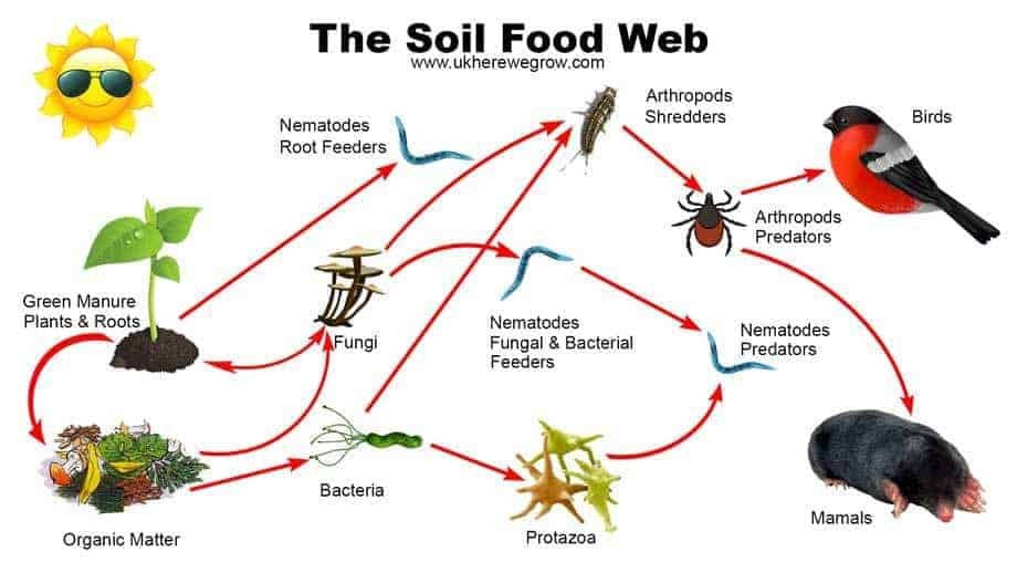 soil food web infographic