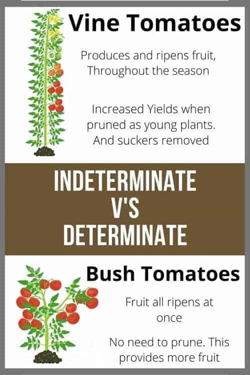 Indeterminate V's Determinate tomatoes