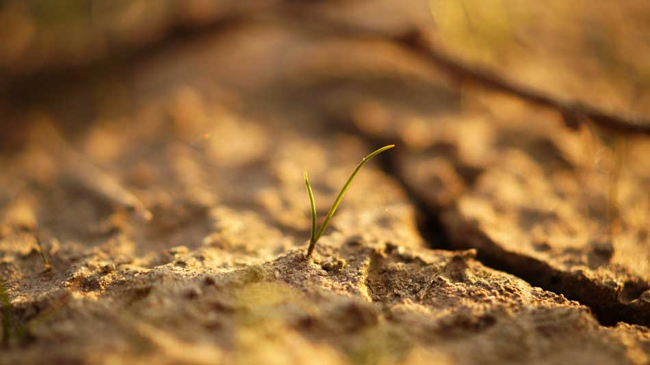 cracked clay soils with small plant