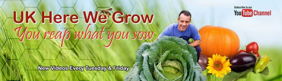 picture of uk here we grow logo