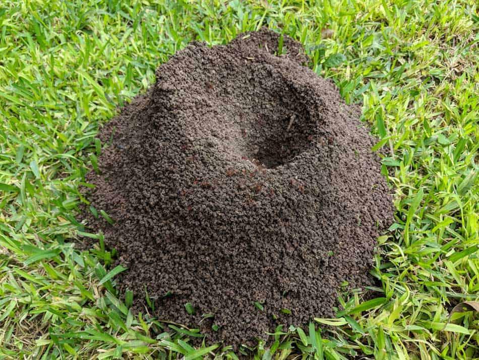 anthill mound