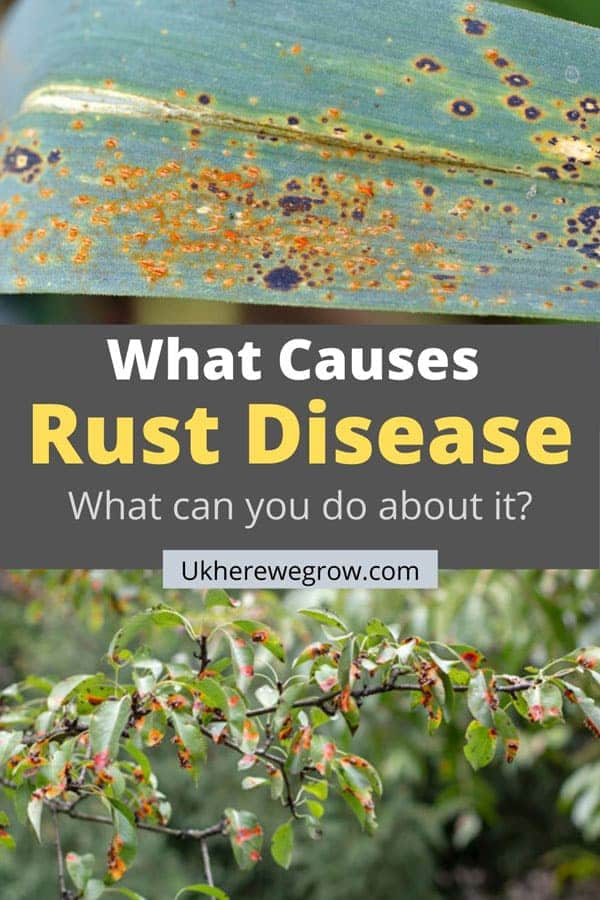 What Causes Rust Disease on Plants? and How to Treat Them?