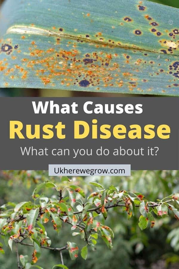 Pinterest image what causes rust disease