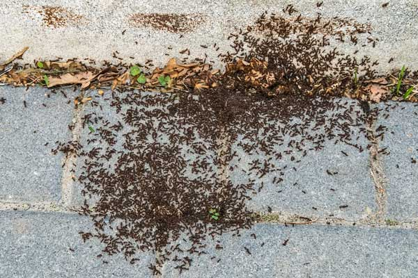 ants on a path