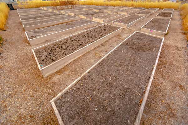A lot of raised beds in a garden