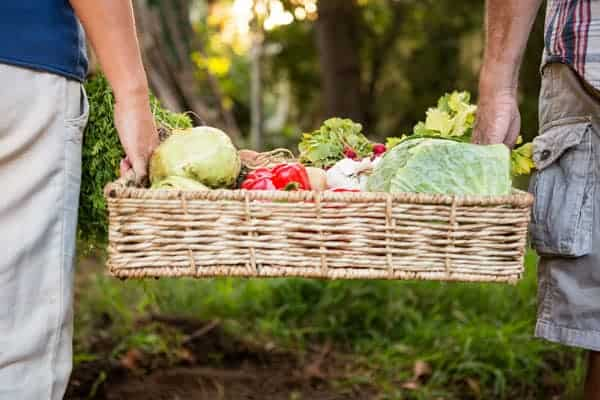 wicker basket of vegetables being carried by two people