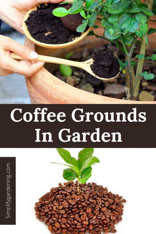 Are coffee grounds good for vegetable gardens?