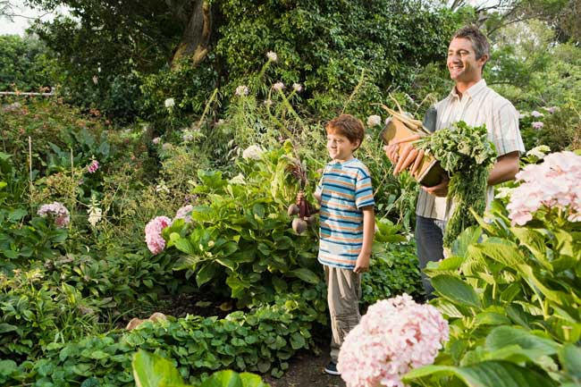 father and son with vegetable harvest