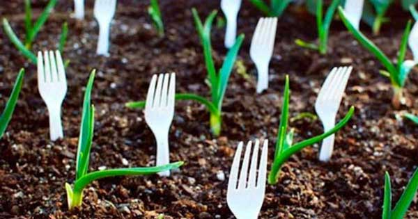 plastic fork upturned placed on the soil