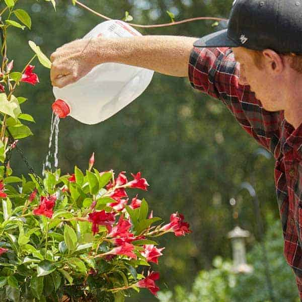 plastic bottle as a watering can