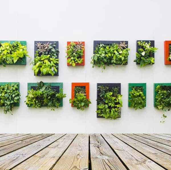 living pictures with plants hanging on a white wall