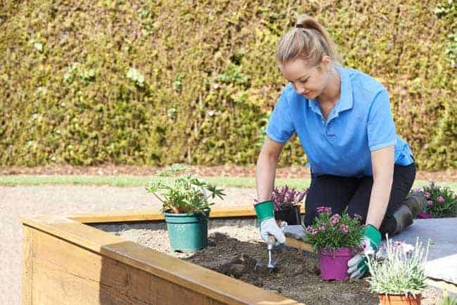 lady planting raised bed