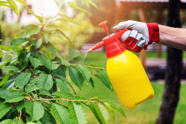 spraying cherry tee
