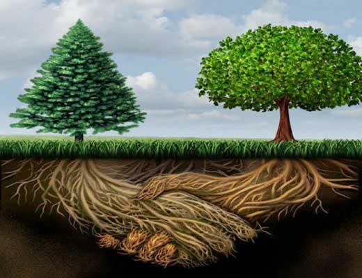 two trees shaking hands with mycorrhizal fungi