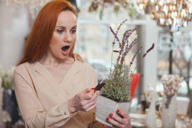 woman looking at the price of potted plant and is shocked