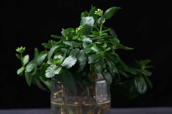 plastic bottle as planter