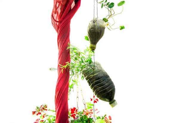 hanging bottle garden