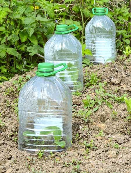 large plastic bottle cloche