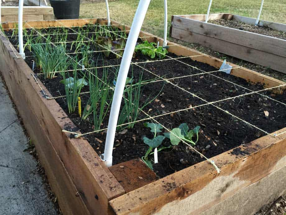 square foot garden bed