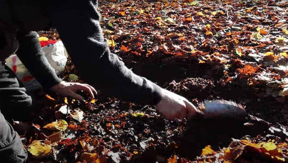 Tony O'Neill scrapping leaves and soil from the forest floor