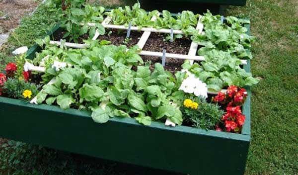 small square foot garden bed