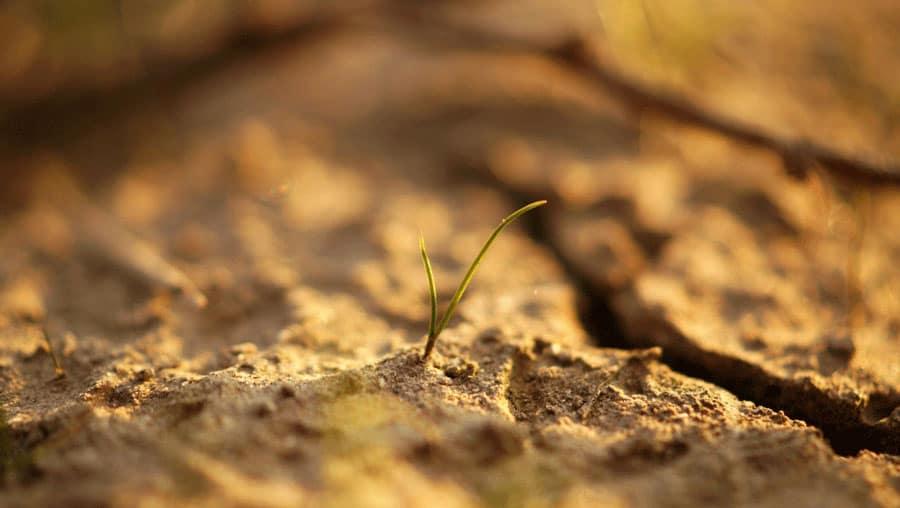 clay soil cracked by sun