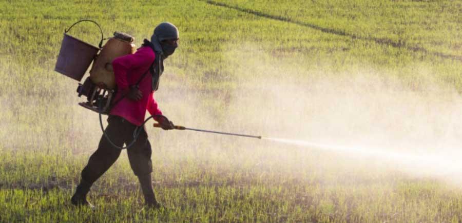 man spraying a field of crops