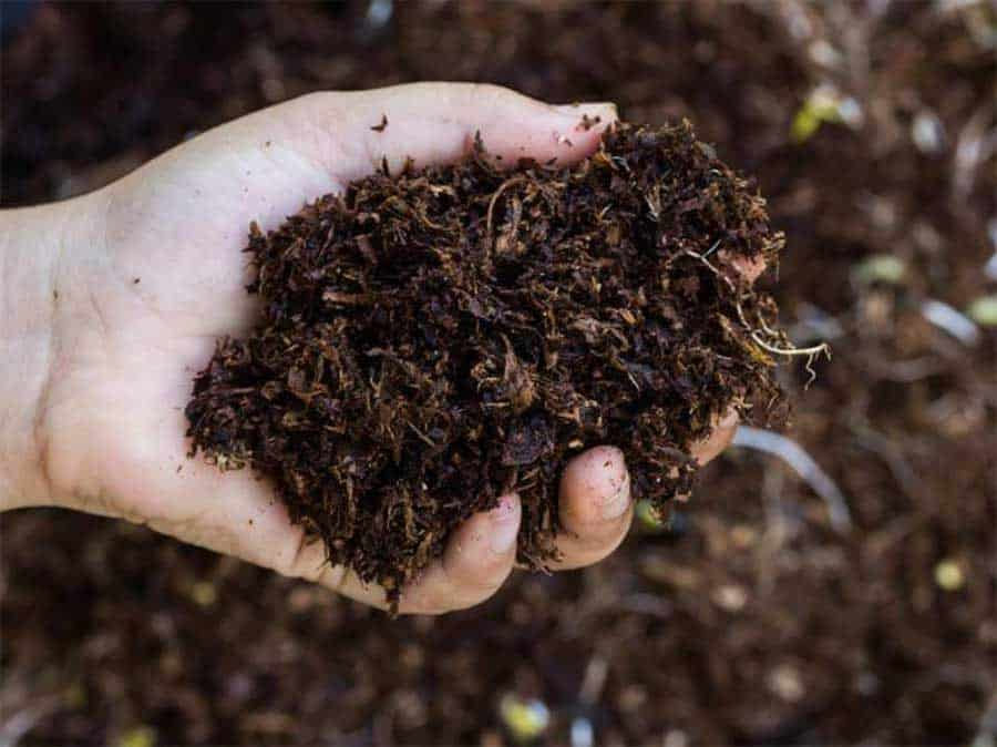 hand full of compost