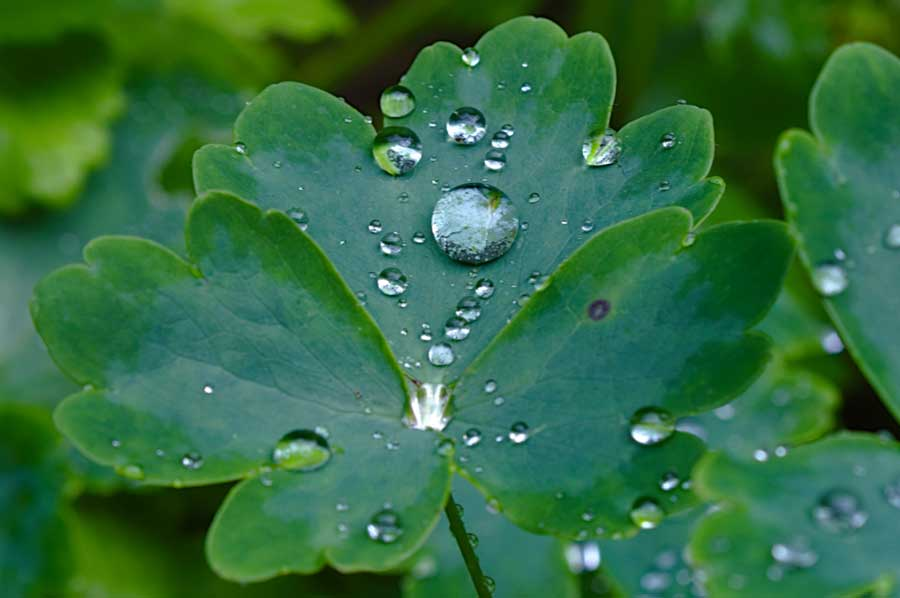 water on plant leaves