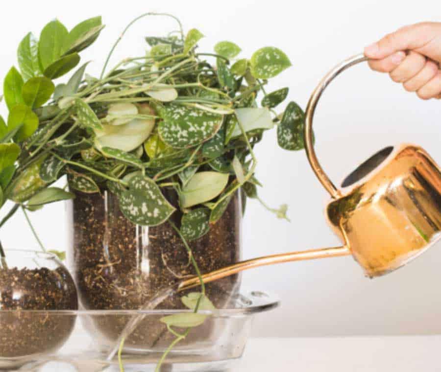 Picture of watering indoor plants from below