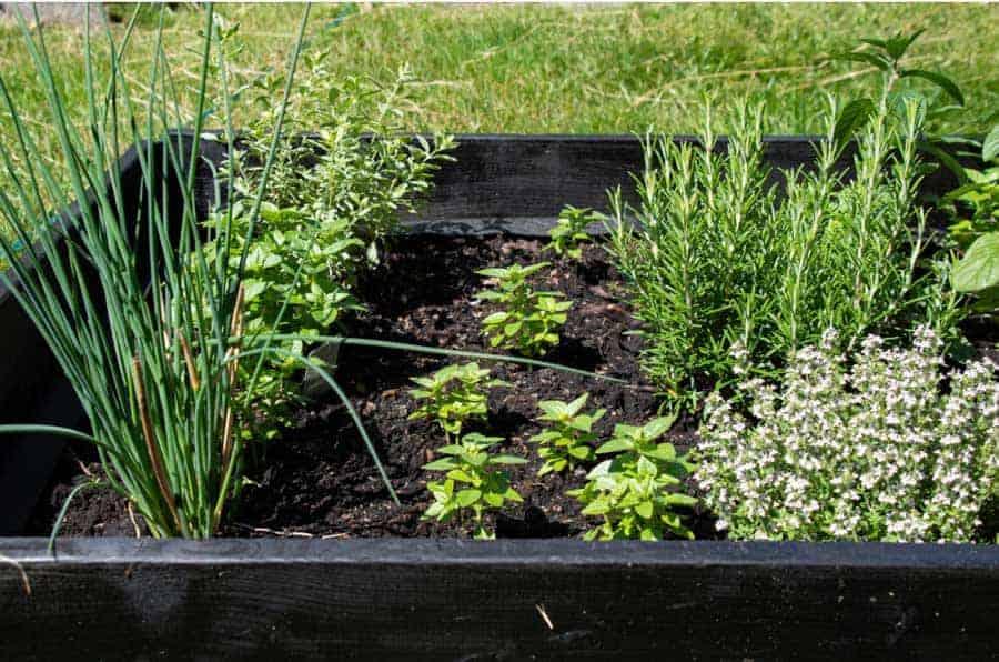 raised bed full of herbs