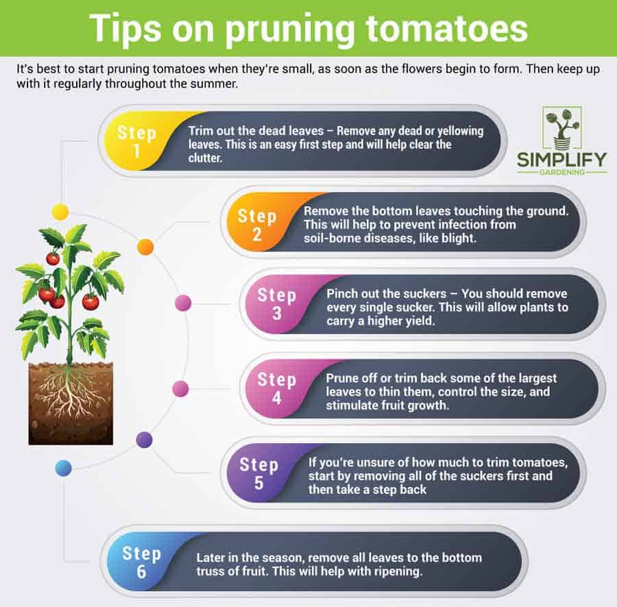infographic on pruning tomatoes