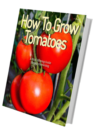 Picture of how to grow tomatoes ebook