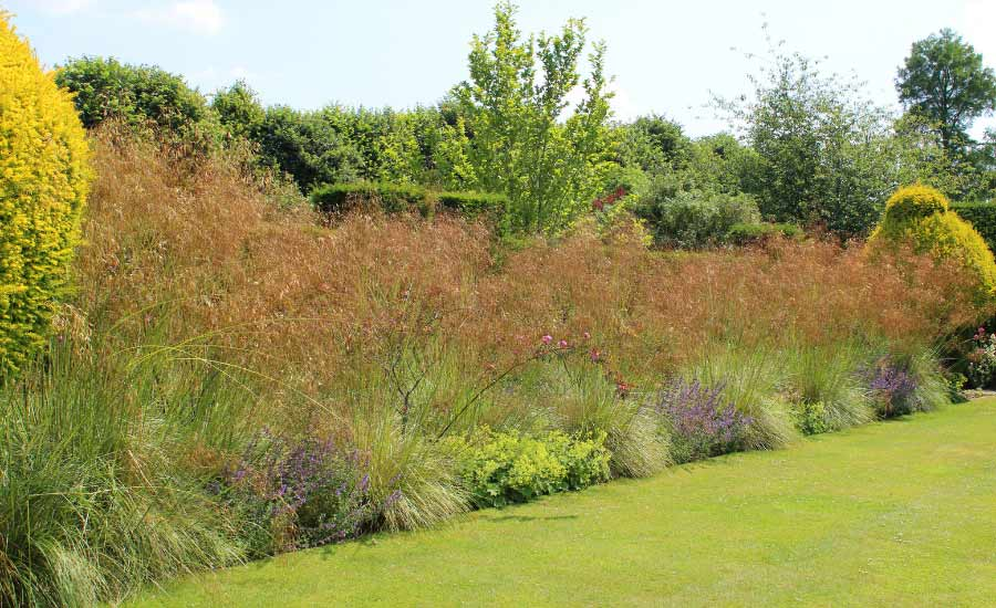 Picture of a border created with grasses