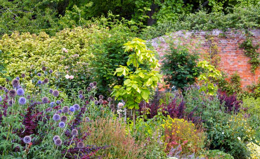 Picture of a border created with herbaceous plants