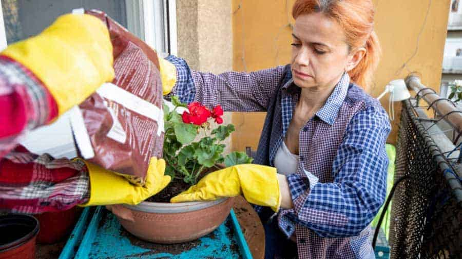 Picture of lady top dressing her flower pots with soil