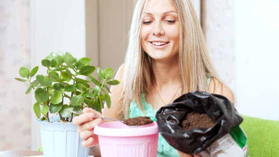 picture of blonde lady replanting a house plant