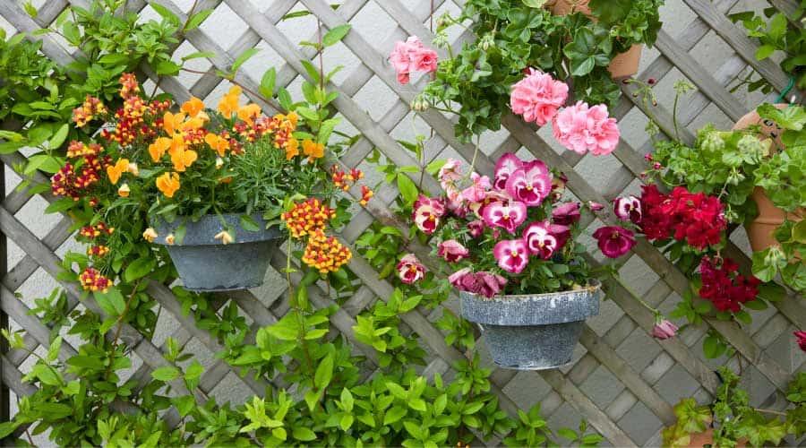 Picture of Flower-pot-planters-on-a-trellis