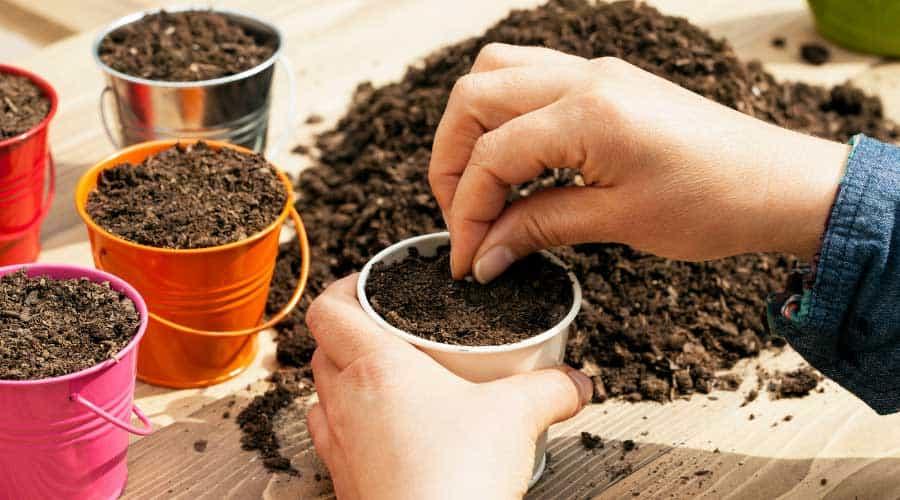 hands sowing seeds into metal pots