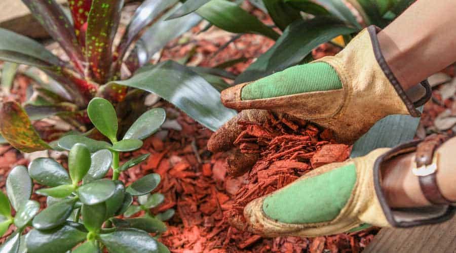 gloved hands adding woodchips to garden
