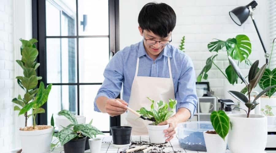 man repotting plants