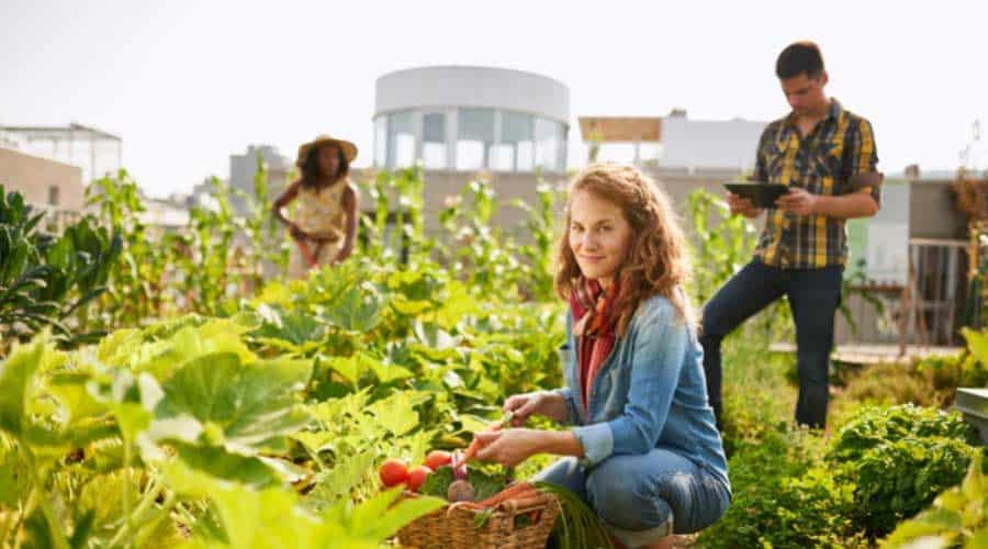 people in garden harvesting vegetables