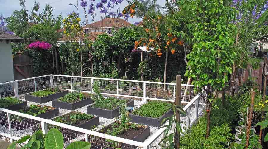 vegetable garden in enclosed fenced area
